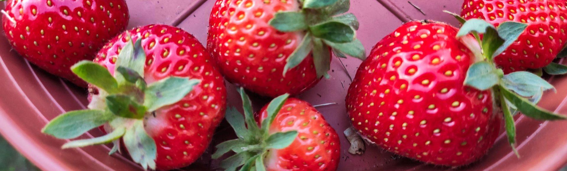 Erdbeeren richtig anbauen